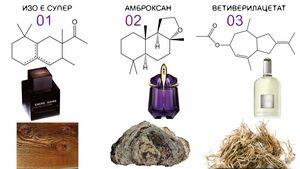 Адаптация носа к запахам