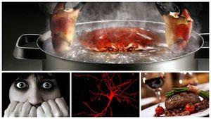 Болезни и фобии 21 века, ранее неизвестные человечеству