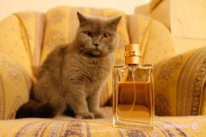 Chanel allure: аромат вне времени