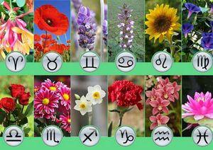 Цвет и знаки зодиака