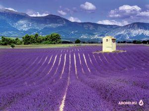 Дыхание лиловых полей: парфюмерия с лавандой
