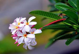 Экзотика ароматов: мона ди орио нашла свое золотое сечение