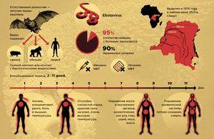 Как передается вирус эбола?