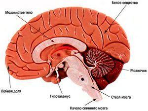 Как происходит изменение головного мозга под действием алкоголя…