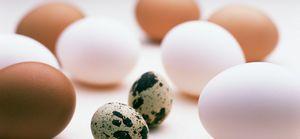 Как употреблять перепелиные яйца?