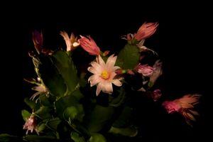 Комнатные растения лечат