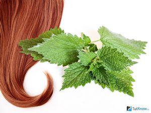 Крапива — лучшее природное средство для волос