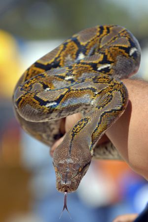 Массаж змеями: цель, эффект и противопоказания