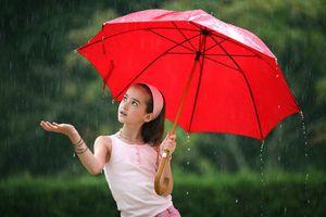 Модный зонт: как выбрать и ухаживать