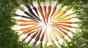 Морковь — королева стола