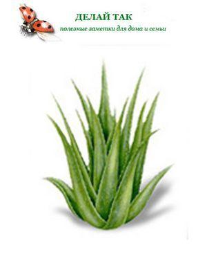 Полезные капустные маски для лица