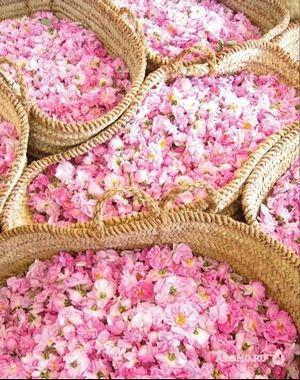 Роза аравии: rosa santa maria novella