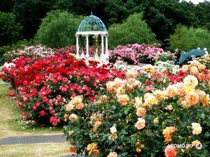 Три аромата с розой