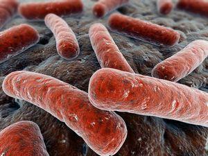 Туберкулез и его опасность
