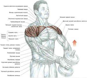 Упражнения для мышц на турнике